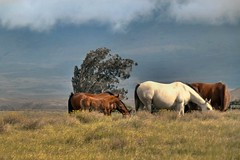 Hospital horses 12/12/5 (Jen R) Tags: horse pasture colt grazing