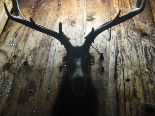 elk skull (1)