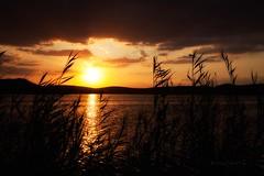 Atardecer en la laguna (Jose Casielles) Tags: color luz atardecer puestadesol laguna amistad yecla fotografiasjcasielles