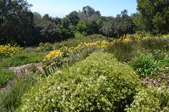Beautiful spring flowers in Kirstenbosch Photo