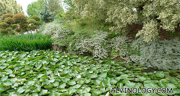 The ponds are filled with beautiful plants too