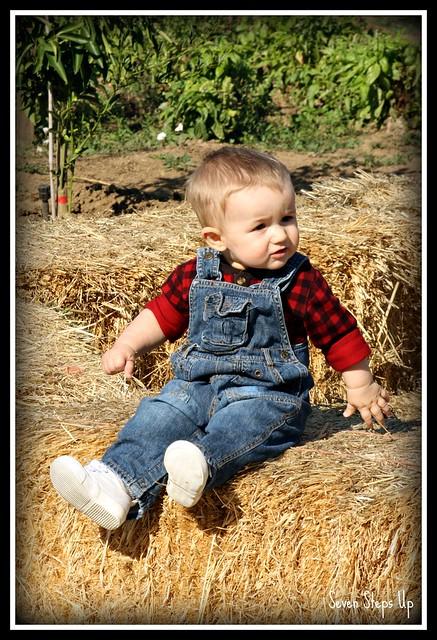 Fall Farm 2011 028B