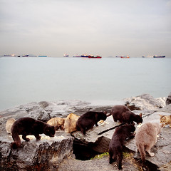 Cats Having Dinner (E.L.A) Tags: sea sky food cats pets beach animal rock dinner turkey square outdoors photography evening seaside kitten feline rocks europe day ship feeding eating nopeople istanbul rainy transportation care domesticanimals foodanddrink domesticcat selectivefocus colorimage animalsfeeding animalthemes mediumgroupofanimals october2011 coth5 ruby5
