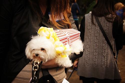 Popcorn, Halloween Dog Parade 2011, Tompkins Square Park, East Village, New York City