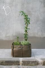 BACSAC nl BACSQUARE4 (meerdangrijs) Tags: outdoor bloempot plantenbak bacsac plantenzakken