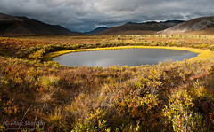 Golden Yukon Pond Panorama (Marc Shandro) Tags: autumn light panorama canada fall nature water beautiful clouds landscape pond solitude peace view cloudy outdoor north scenic nopeople arctic yukon northamerica remote wilderness sunlit untouched idyllic uninhabited tundra freshwater darksky pristine unspoiled dempsterhighway zoomify
