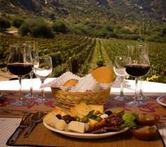 Congreso Latinoamericano de Viticultura y Enología sesiona este año en Chile