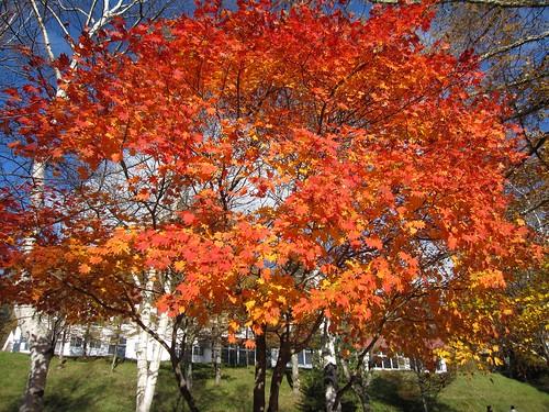 女神湖の紅葉② 2011.10.26 by Poran111
