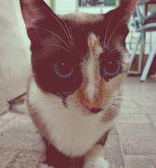 # Cat (Carlos Fachini ™) Tags: pictures eye animal animals cat photoshop vintage photography image picture imagens photograph gato efeito animales fotografia animais imagem photograpy a130 w130 sonyw130