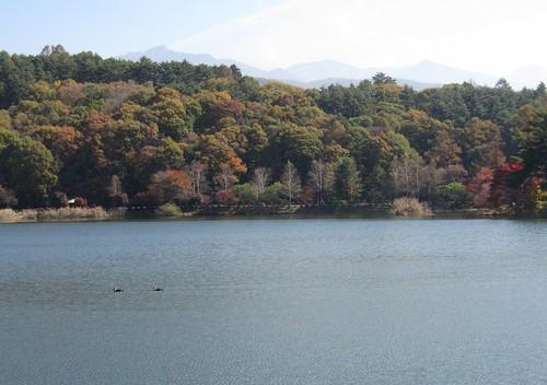 蓼科湖と鴨 2011年10月28日11:58 by Poran111