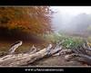 Jægersborg Dyrehave [Denmark] - Broken Oak In Autumn Mist (UrbanMescalero) Tags: wood morning autumn mist colors denmark oak october path danmark klampenborg 2011 jægersborgdyrehave dyrehave thedeerpark canoneos5dmarkii canonef24105lf4isusm brokenoak doubleniceshot mygearandme mygearandmepremium mygearandmebronze mygearandmesilver mygearandmegold mygearandmeplatinum mygearandmediamond dblringexcellence tplringexcellence artistoftheyearlevel2 wwwurbanmescalerocom gorankljutic eltringexcellence