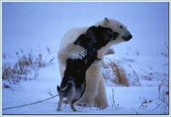 Polar Bear Hugs Dog (3 of 6)
