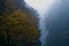 foggy (mauro.cordioli) Tags: fog day 4 85mm f1 nebbia padova piovego