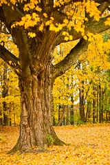 fall fb-0122
