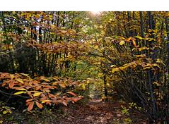 Sentiero d'autunno - Autumn path (Ola55) Tags: wood autumn trees italy leaves foglie alberi autunno perugia umbria italians bosco montemalbe the4elements mywinners aplusphoto worldtrekker yourcountry ola55