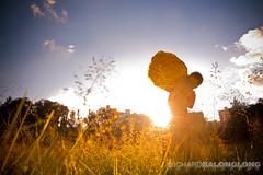 Sun-Flower-Boy (Richard Balonglong) Tags: park city light boy sunset