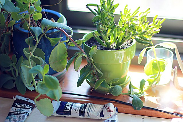 plants on the windowsill