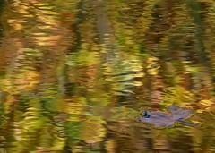Sencillamente.........es el otoo (T.I.T.A.) Tags: autumn hoja rio agua colores otoo tita reflejos carmensolla