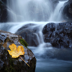 esdoornblad (look to see) Tags: waterfall leaf blad oberstdorf waterval ahorn esdoorn