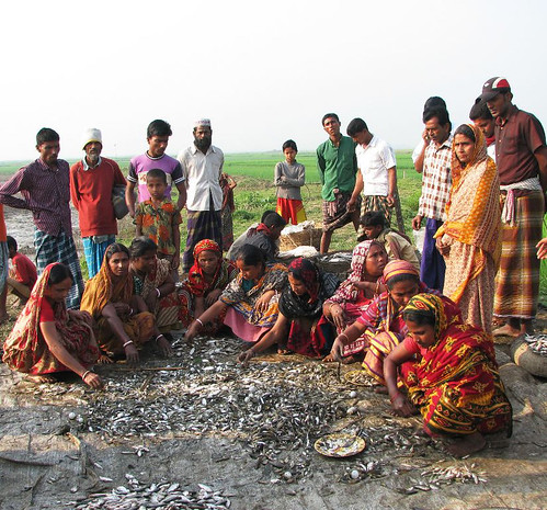 Sorting of fish by women, Sunamganj, Bangladesh. Photo by Balaram Mahalder, 2008