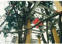000063 (Ngo Quang Ha) Tags: lenin childhood canon thong ho hanoi vien bac nhat cong hni mygearandme ngoquangha filmsetflickriver