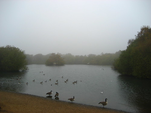 November morning mist over Hollow Ponds
