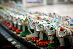 Little White Elephant (sydbad) Tags: white elephant canon thailand is little l usm phuket ef f4 24105mm phromthepcape eos60d