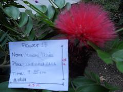 17 (marianauchoa2011) Tags: flres