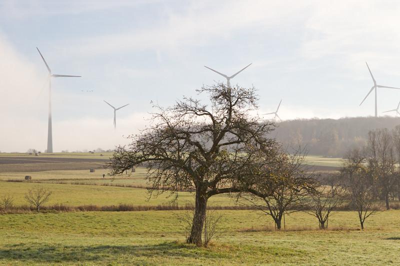 Ветряк как продолжение кроны CD7I7745