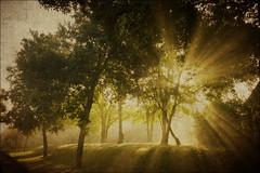 Dugenta - Golden Rays (manlio_k) Tags: trees italy texture alberi canon dawn alba rays texturized 400d digenta