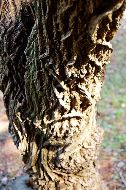 TreeBarkD