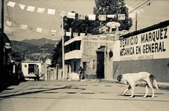 Republica do Mxico (lirin@r) Tags: film public analog mexique kodaktrix400 leicam4 republicadomxico