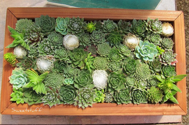 Succulent frames - How to Make Vertical Succulent Gardens - Sunset