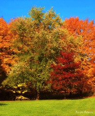 The colors of Autumn (Piscesgirl2~) Tags: trees red orange ontario canada green fall nature colors leaves yellow photography olympus topshots natureplus photosandcalendar natureandpeople worldwidelandscapes natureselegantshots absolutelystunningscapes panoramafotografico greatshotss contacgroup theoriginalgoldseal flickrsportal