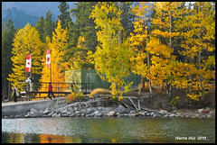Autumn Gold - Rockies N7300e (Harris Hui (in search of light)) Tags: vacation lake canada color fall yellow vancouver rockies gold nikon colorful bc fallcolor richmond explore aspens amazingcolors lakeminnewanka boatdock canadianrockies d300 minnewanka onexplore polarizingfilter polarizing autumngold explored nikon18200mmvr flickrfrontpage nikonuser treesbywater celebratetheharvest nikond300 banffvacation harrishui vancouverdslrshooter my5daysbanfftrip my5dayscanadianrockiestrip longestlakeinrockies mostsaturatedcolors imageonexplore