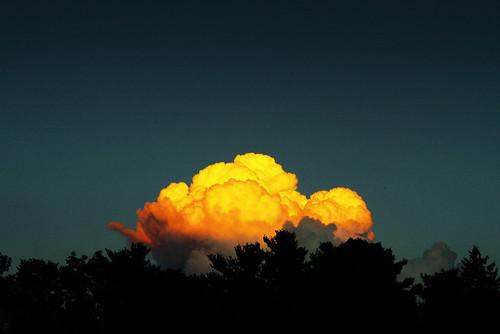 Broccoli Brain Cloud