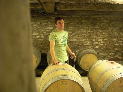 bruno cellar
