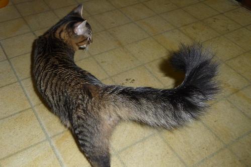 Bushy-tailed