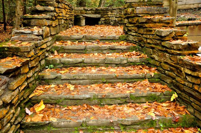 fall walk41