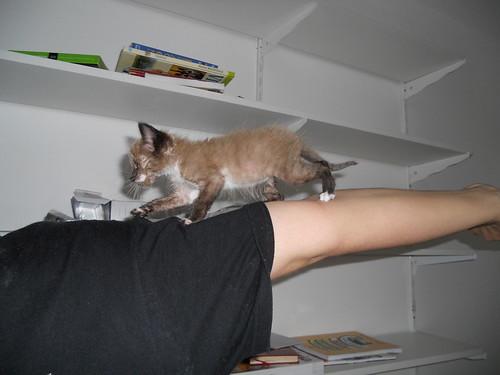 Piolho, o Gato