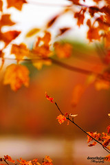 Reach For The Sky (Dorothy Jarry) Tags: life park ri autumn trees red orange lake tree green fall love nature beautiful beauty leaves yellow canon outdoors eos rebel leaf pond pretty branch dof natural bright awesome sigma depthoffield canonrebel canoneos f28 aperature sigma70200mmf28 550d sigma70200mm28 t2i canont2i canoneosrebelt2i canonrebelt2i dorothyjarry