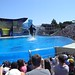 Sea World with SYR - 040