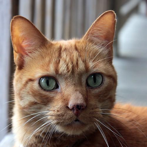Nacho Kitty