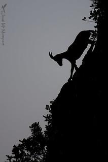 Montesa en descenso
