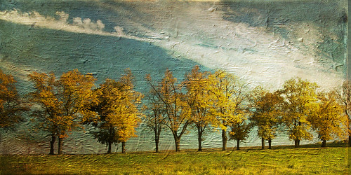 Autumn afternoon by Lynne Larkin