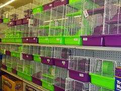 green bird wheel purple cage hamster