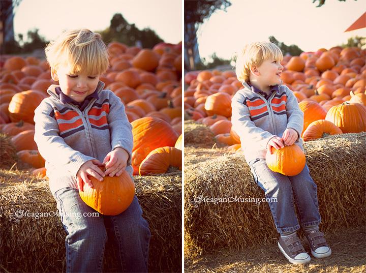 WEB_Composite_PumpkinsA