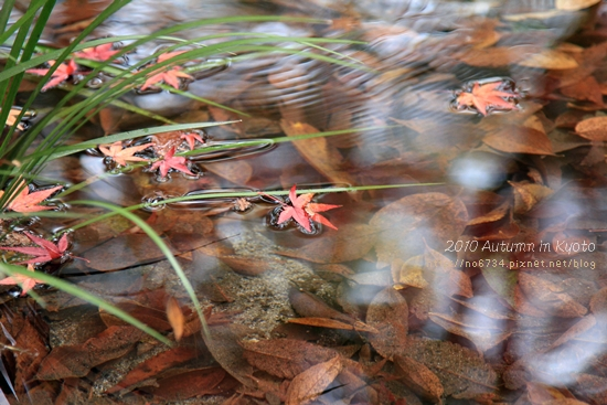 20101207_KyotoWithMoFei_1084 f