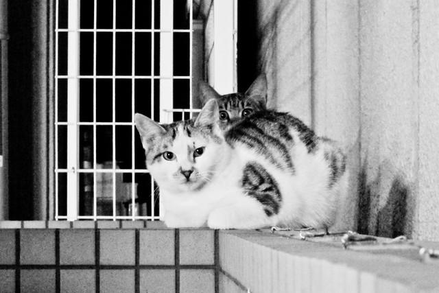 Today's Cat@2011-11-03