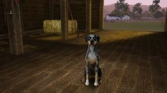 Catahoula Leopard Dog by MamiiGood